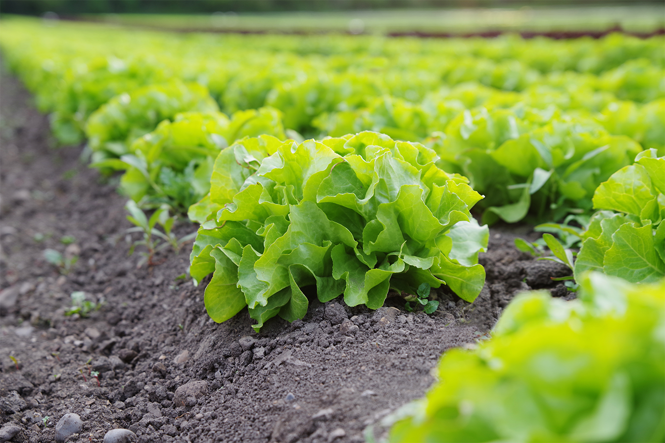 Expansion of Spanish organic farming
