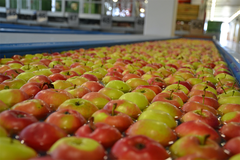 Apples from Europe at the market of UAE