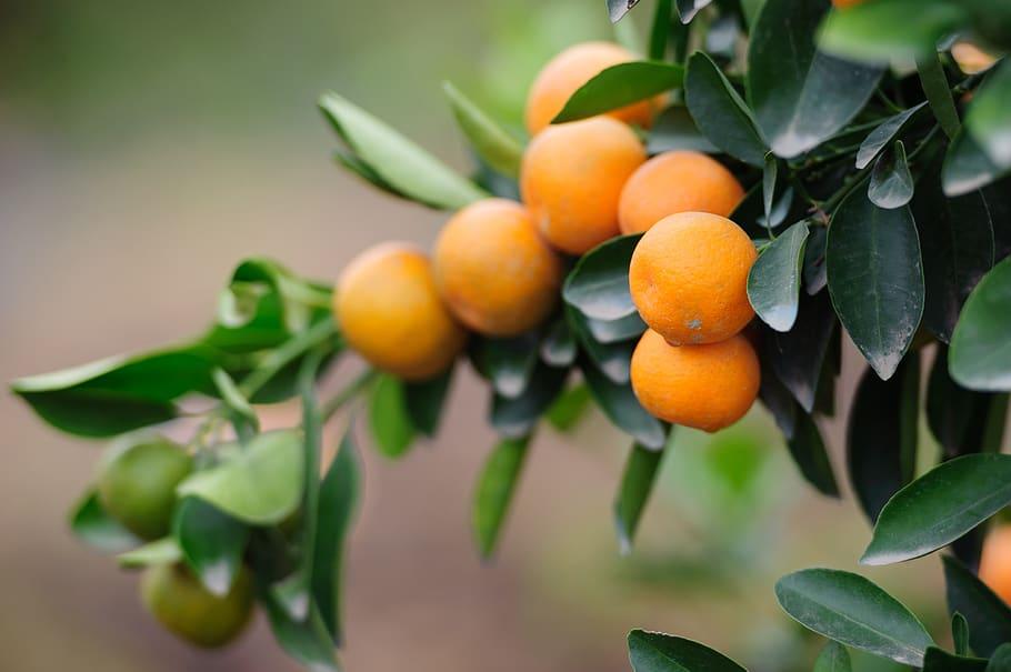 RSA citrus industry limits exports to EU