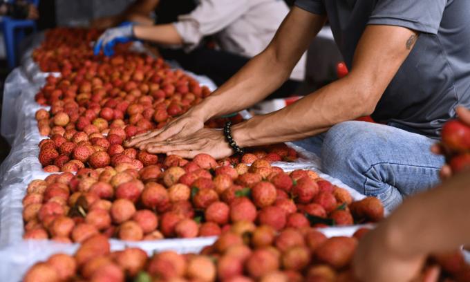 Vietnamese fruit exports to China plummet