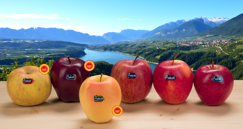 Melinda apples to debut in Asia