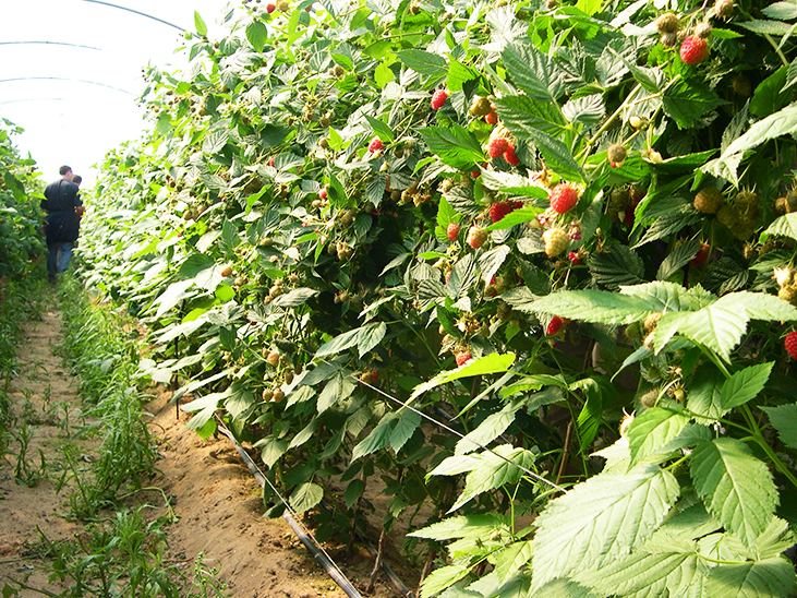 Spanish farmers' union calls for dominance of retail to be addressed (Huelva, Spain) © Réussir Fruits et Légumes