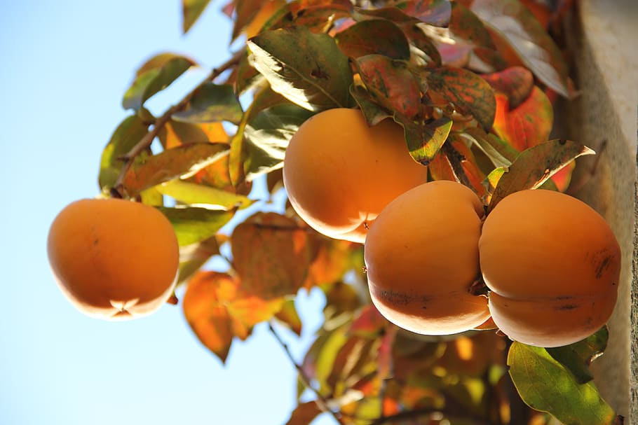 Turkey poised to benefit from China's stonefruit woes