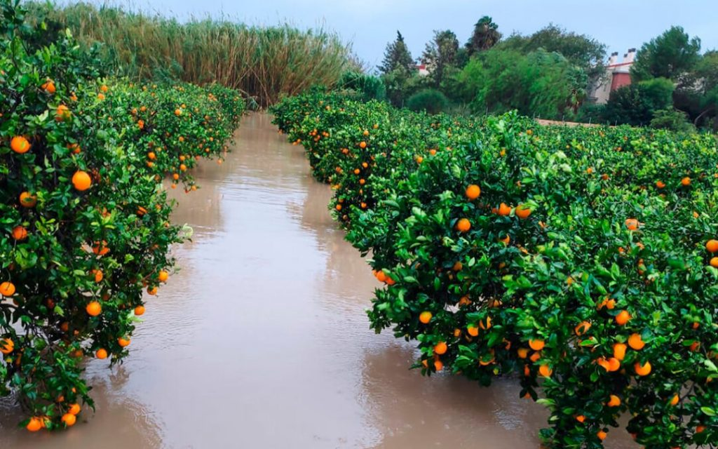 Heavy rains cause losses of €62 million in Valencia's agriculture