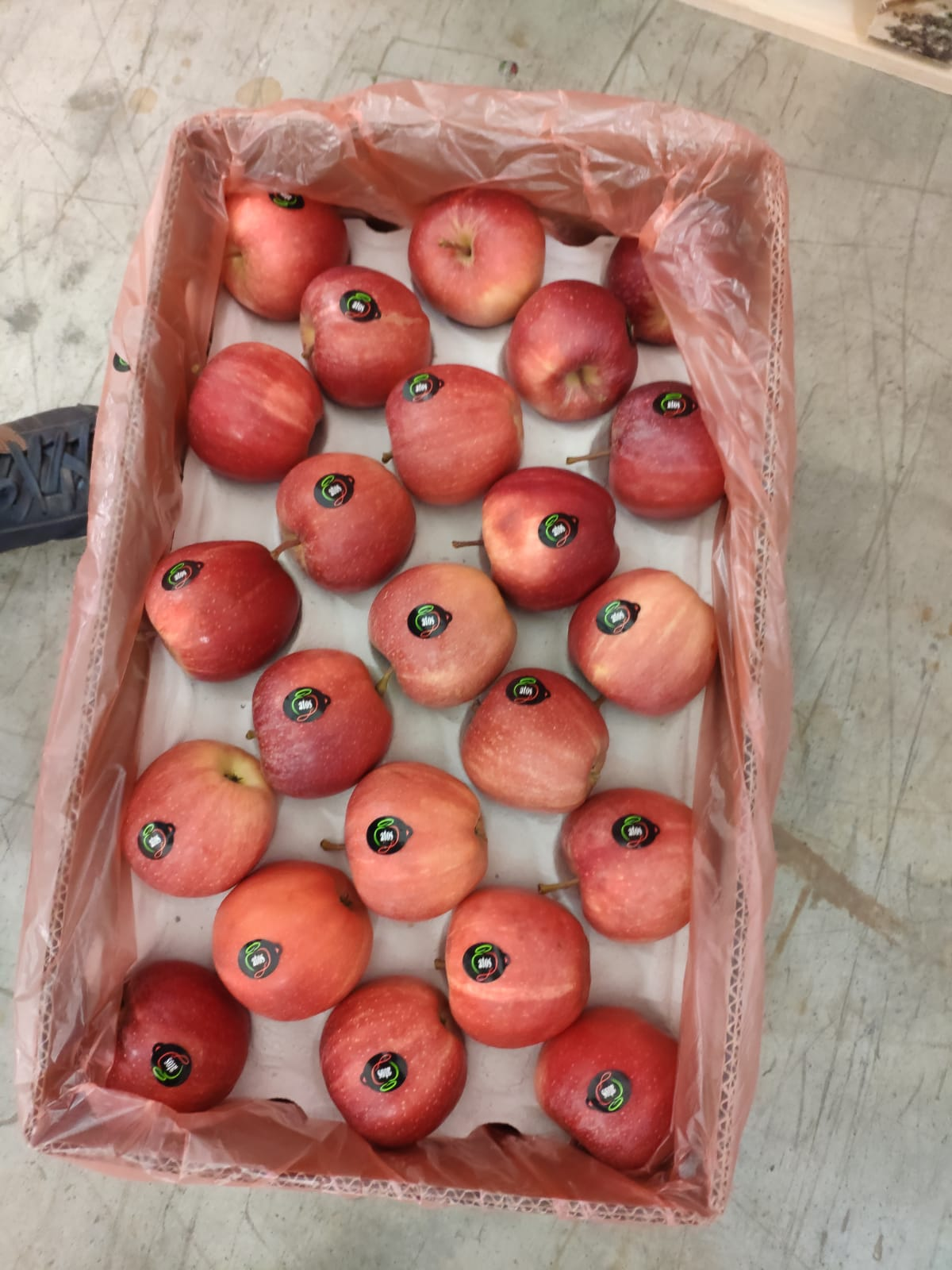 First Arrivals of Apples from Serbia to India