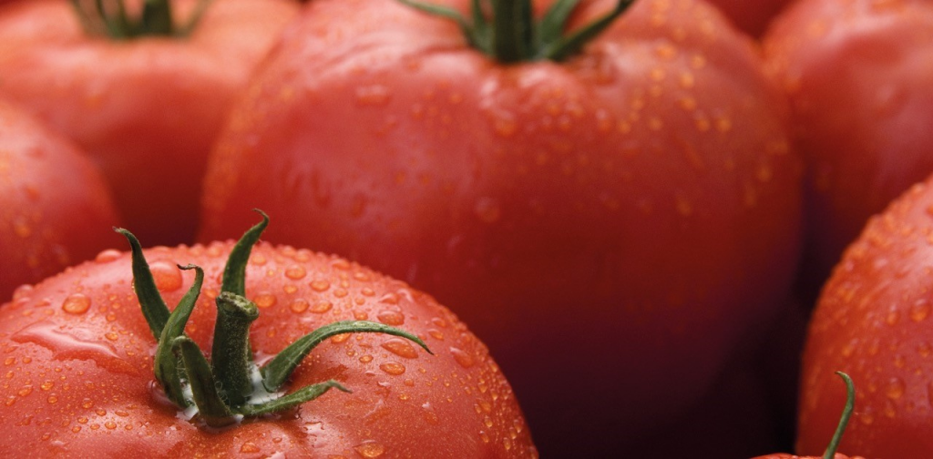 Syngenta to introduce its first commercial ToBRFV resistant tomato variety
