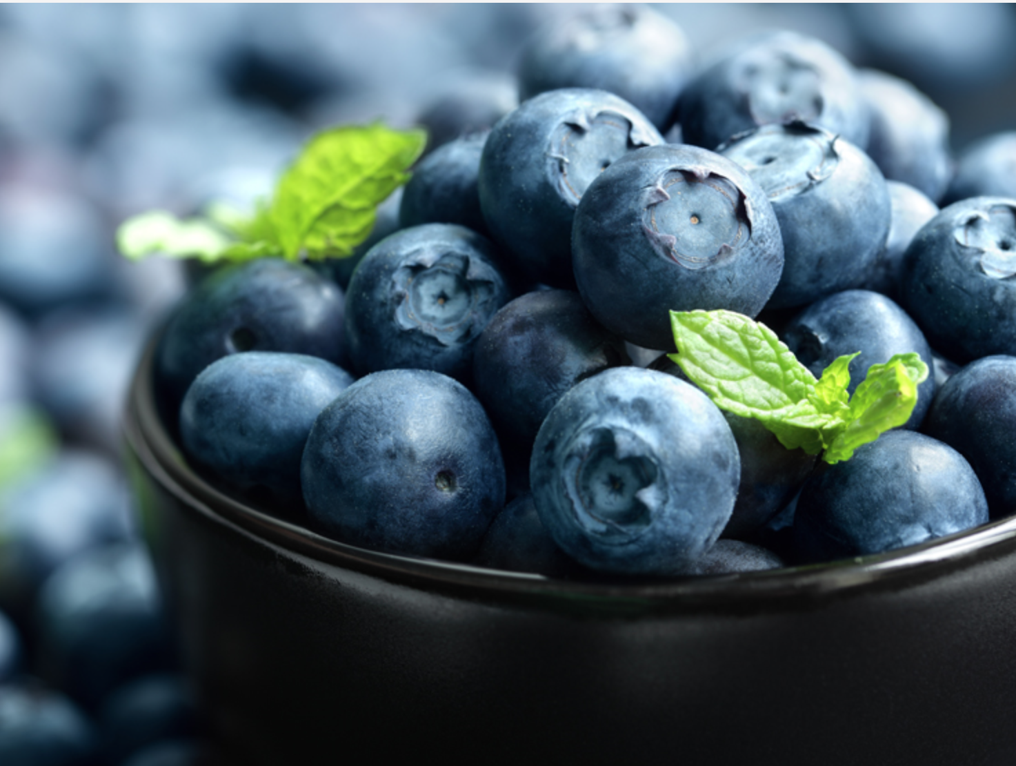 Argentine blueberry season wrapped up with stable numbers and higher sea shipments