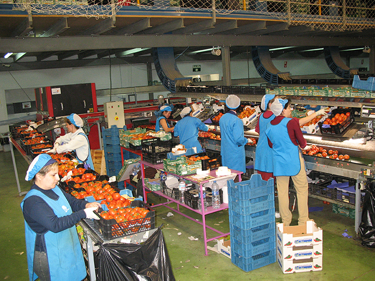 Chinese Market Forum: many challenges but bright prospects for Spanish exporters © Réussir Fruits et Légumes