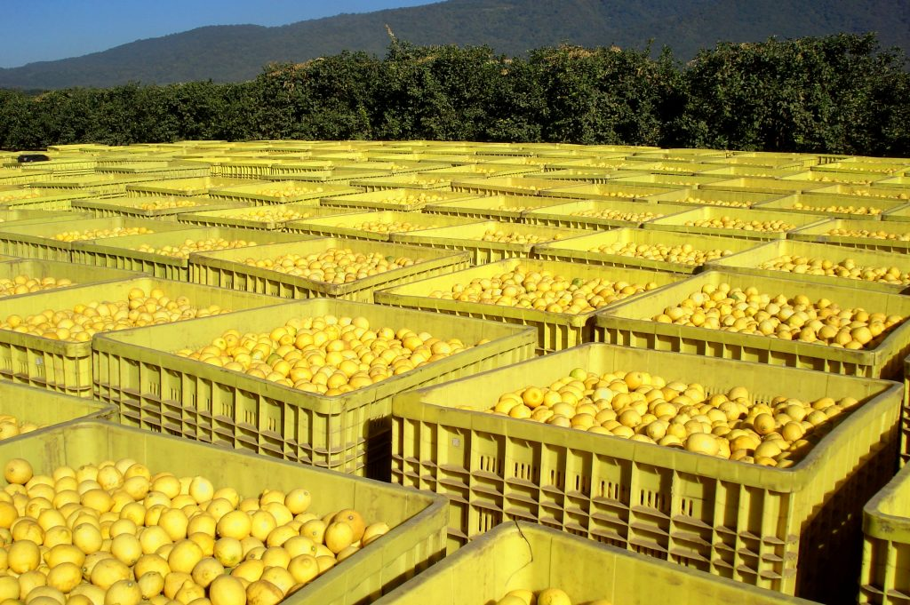 Argentina's drought-affected lemon crop to shrink by 30%