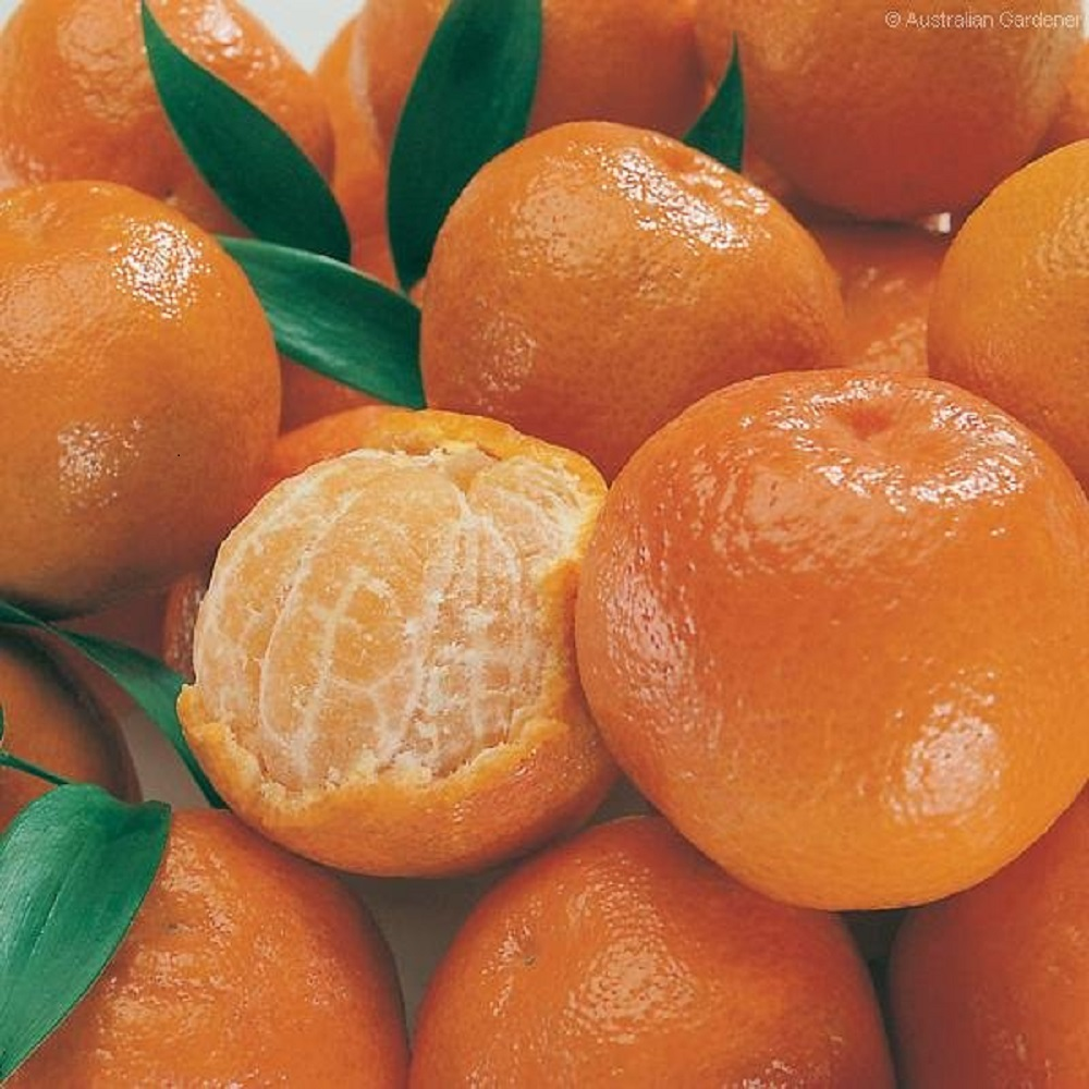 Alibaba invests in tech for fruit handling