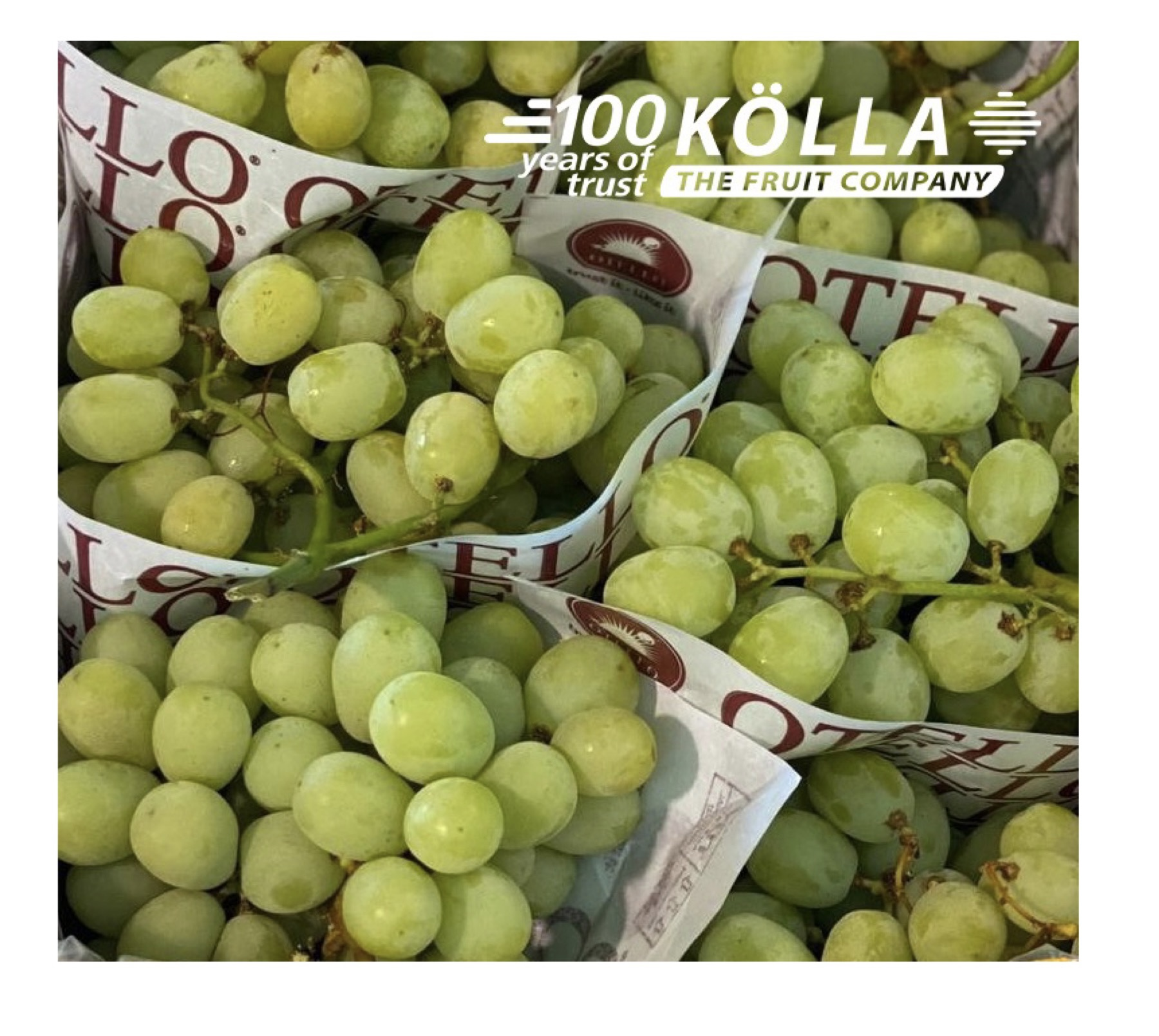 Sustainability - 1.3 million fewer foam separators in grape packaging in the last 2 years
