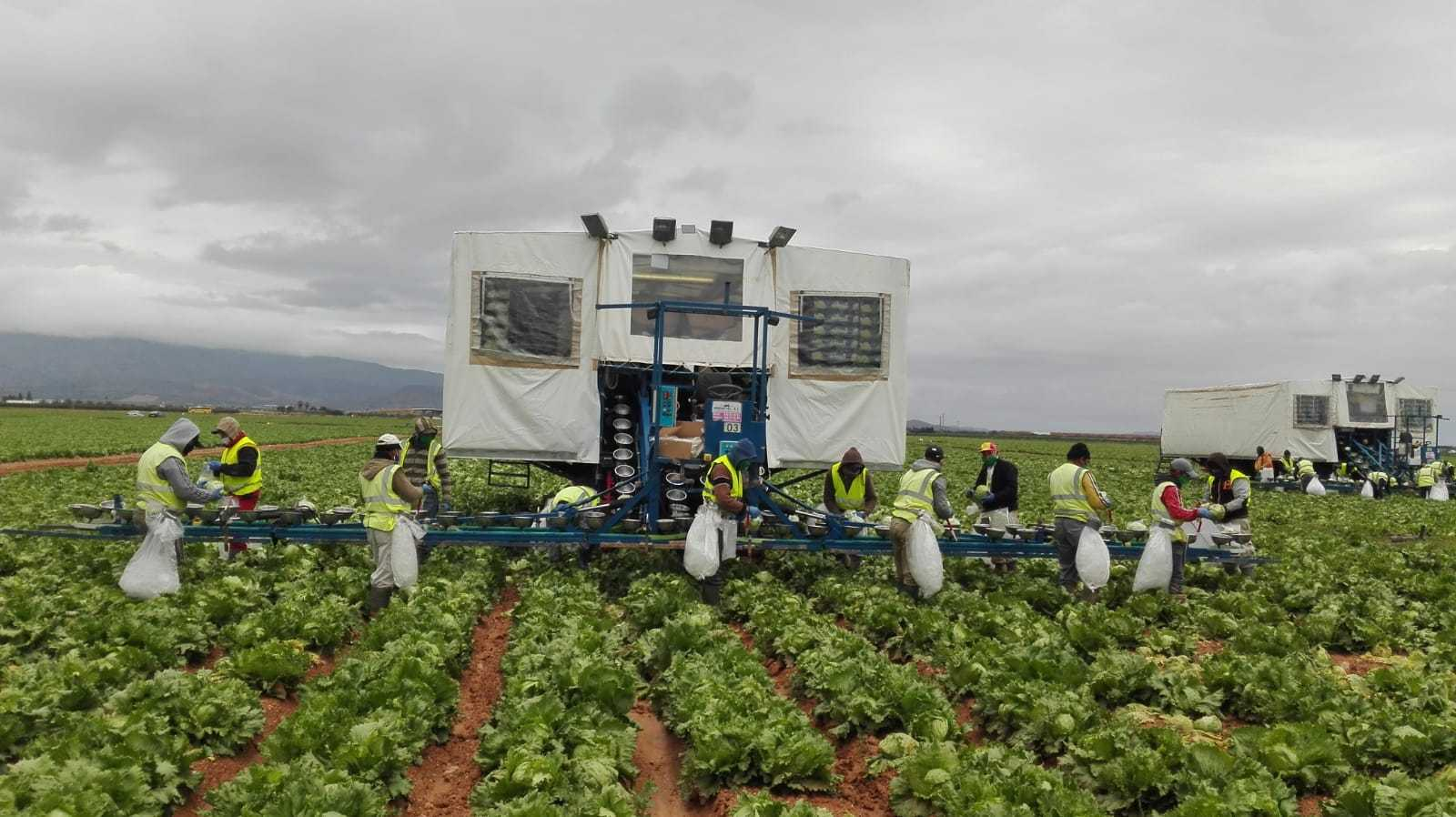 Andalusia's agricultural sector calls for agricultural workers to be given priority vaccinations