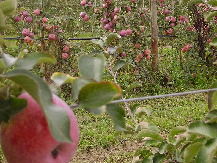 Despite growth of Dutch organic farming, share in supermarkets remains small © Réussir Fruits et Légumes