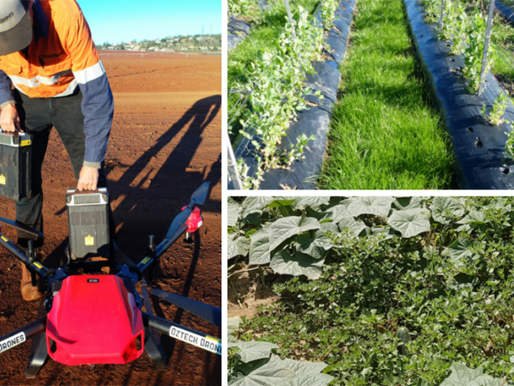 Upcoming webinar: The future of integrated weed management in vegetable farming