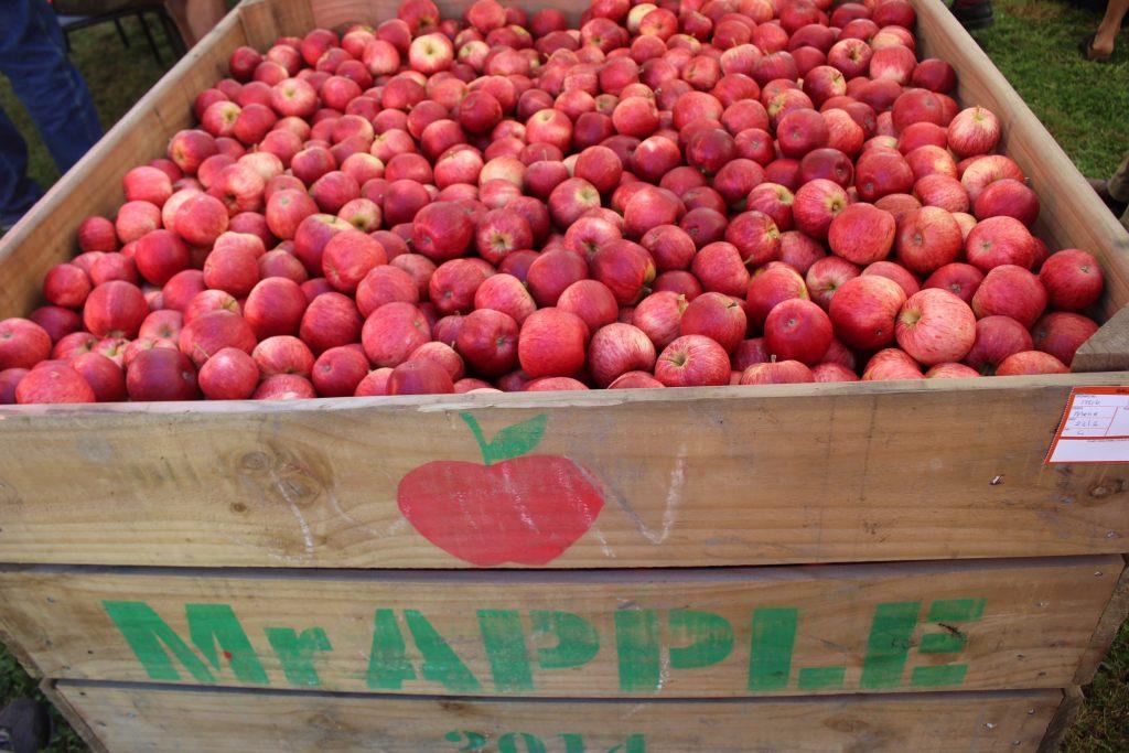 New Zealand's apple exports shrink