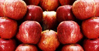 Chilean organic apple exports grow
