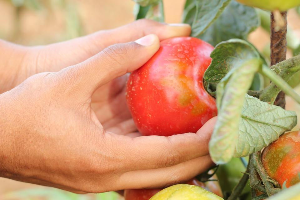 Bulgaria's organic farming contracts despite growth in consumer demand