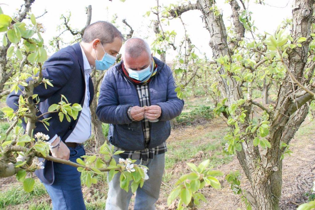 Frosts wreak havoc on Lleida's stone fruit
