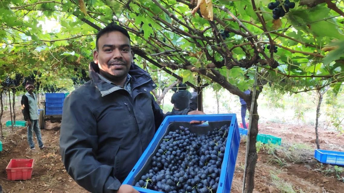 India's grape exports to the EU fall 18%