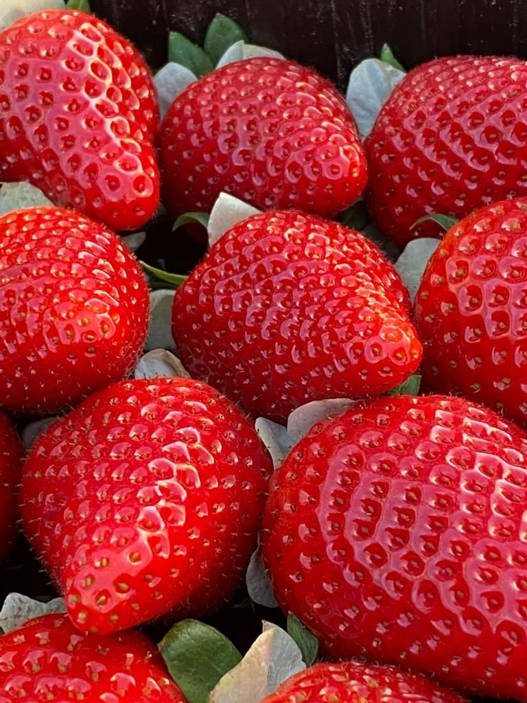 Parthenope® strawberry from CIV, a winning choice in the Southern Italian areas of the provinces of Caserta and Naples