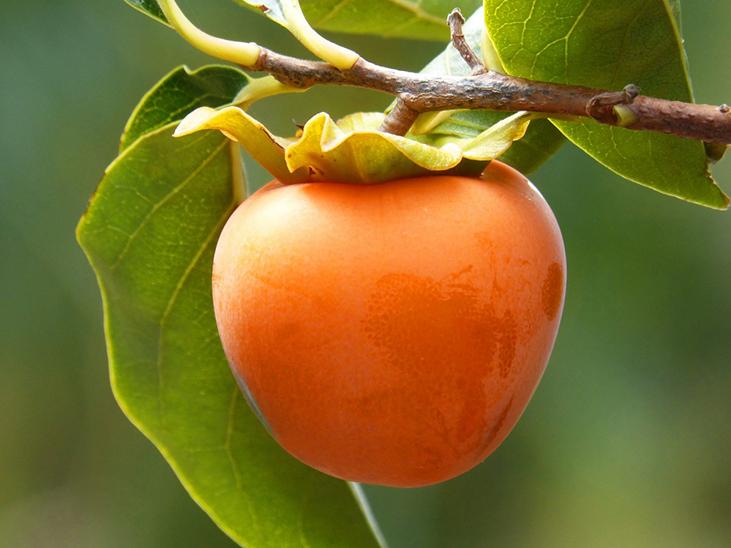 New Zealanders grow increasingly fond of persimmon © PxHere