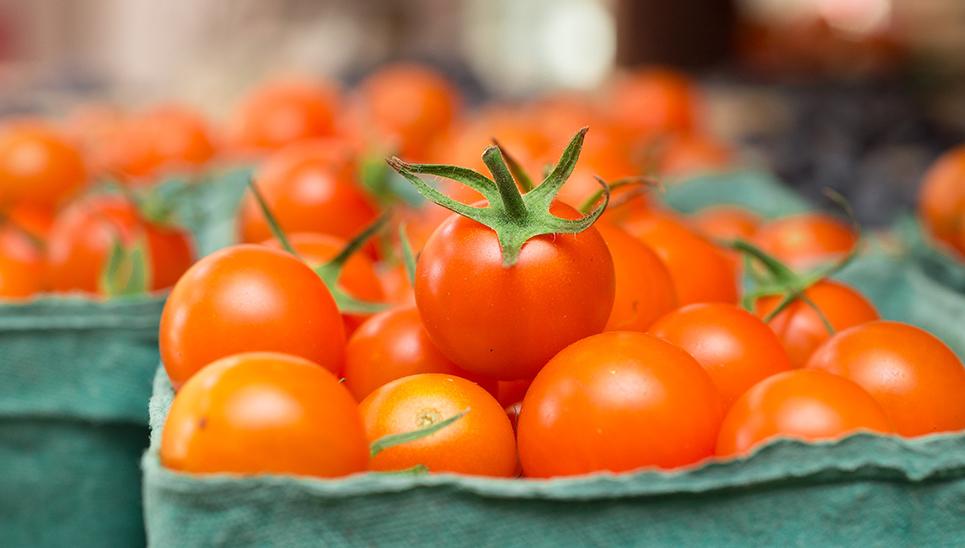 Mini symposium on tomato quality on Thursday 15 April