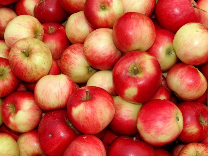 8% fall in New Zealand apple crop