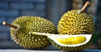 Plantations International launches organic durian