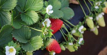 Spanish fruit imports climb