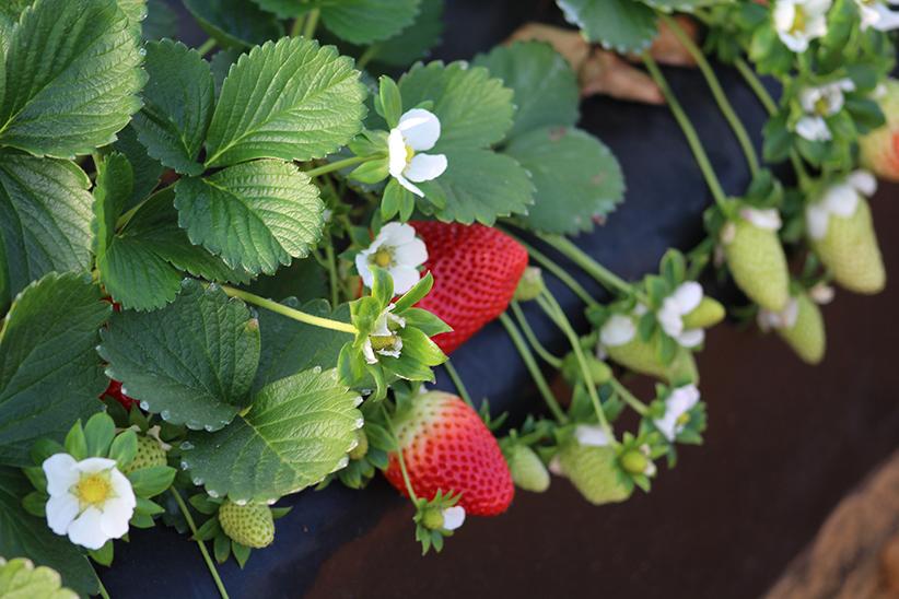 Spanish fruit imports climb © Freshuelva