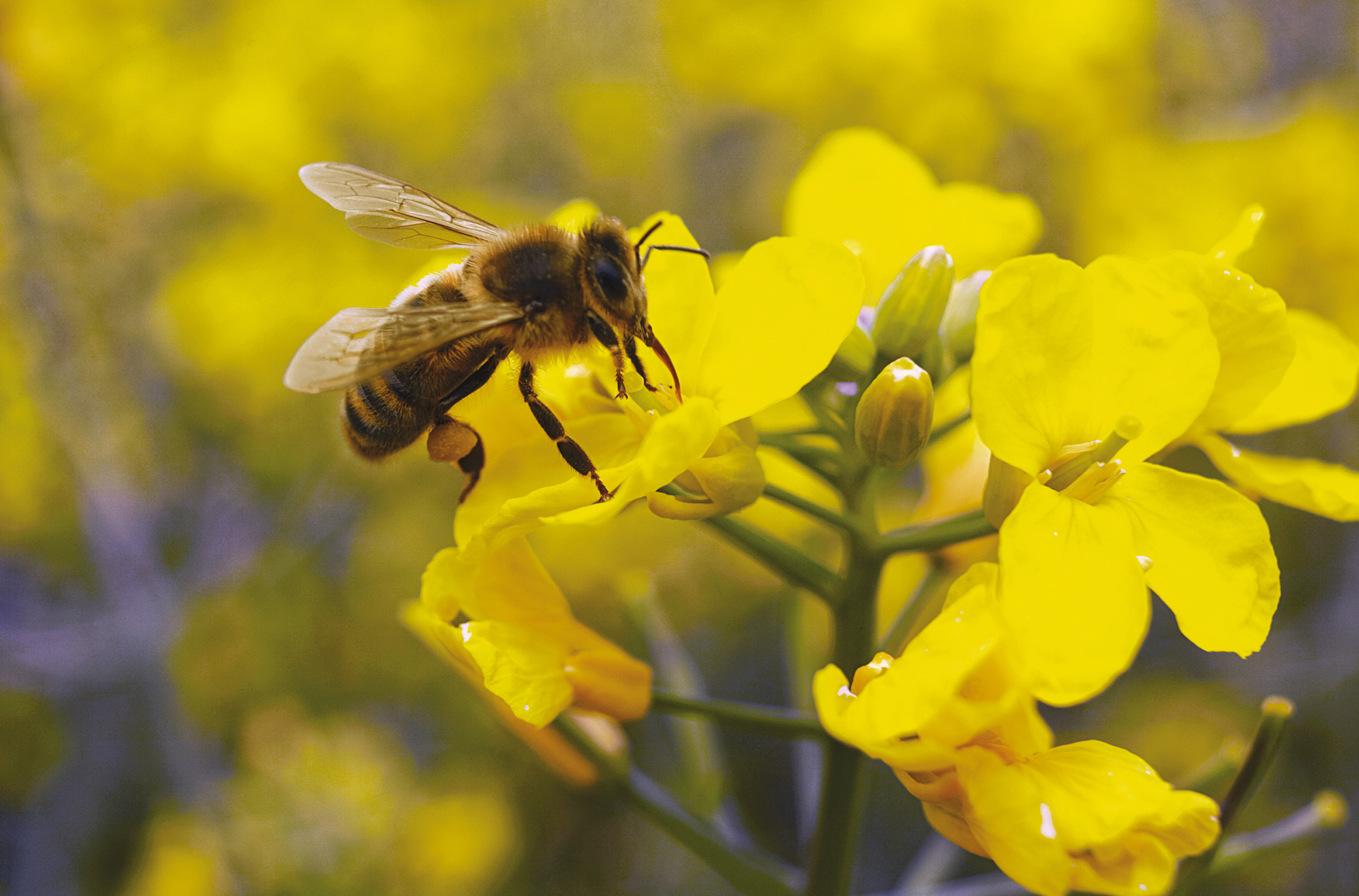 EU court upholds ban on insecticides