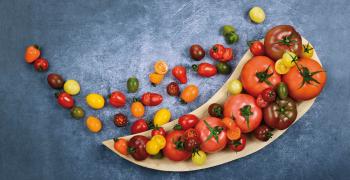 TomaTech Cracks the Code for ToBRFV-Resistant Tomatoes
