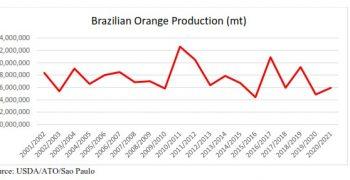 Larger Brazilian orange crop expected despite adverse weather