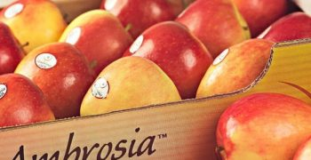 Ambrosia ™ apple season ends early with dynamic sales and positive results