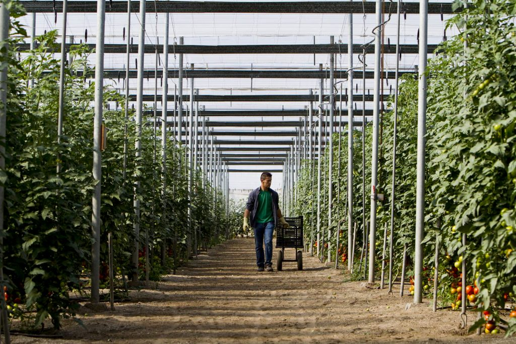 Hortiespaña calls for better defence of Spanish fruits and vegetables
