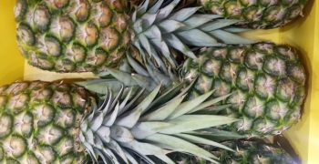 Report exposes Costa Rican government neglect of complaints in organic pineapple sector