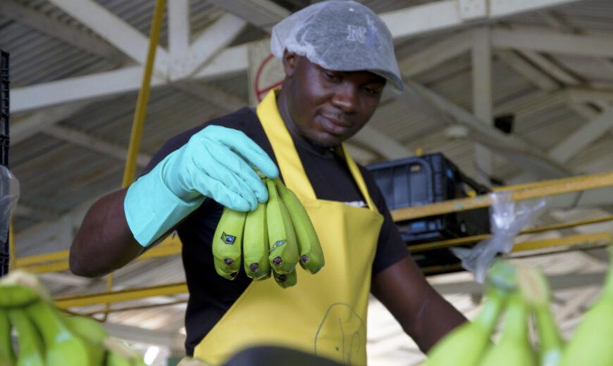 Banana workers © Fairtrade