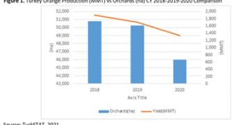 Turkish orange crop shrinks 23%