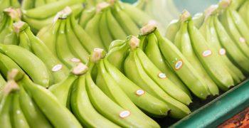 Ecuador ships fewer bananas in 2021