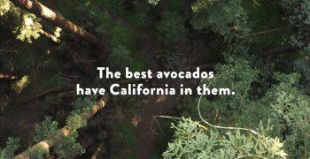 California avocados take a road trip