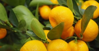 Turkey's fresh produce exports soar
