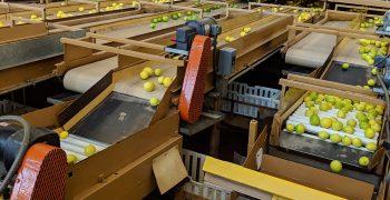 US grants greater access to Australian citrus