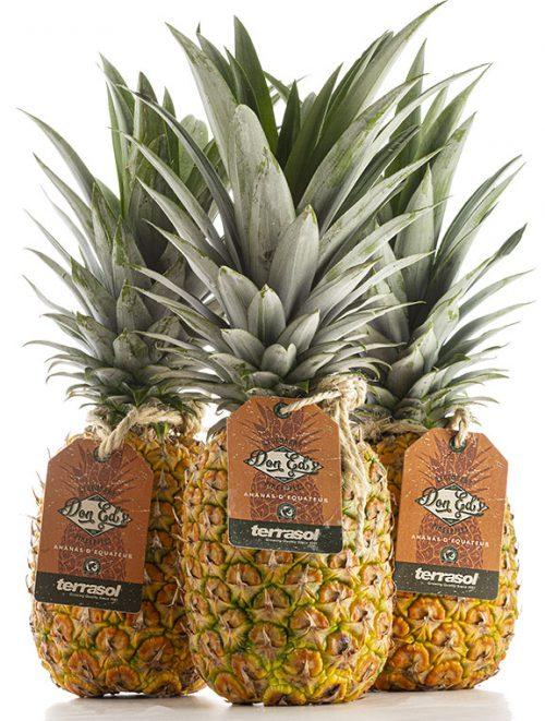 Terrasol pineapple