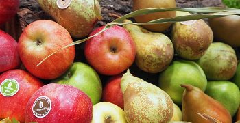 Contrasting expectations for EU's apple and pear crops