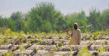 Afghanistan's fresh produce trade picks up