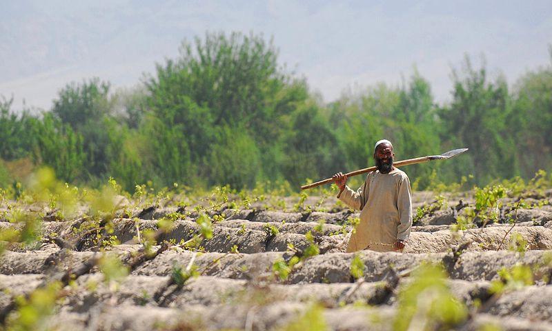 A farmer works in the fields