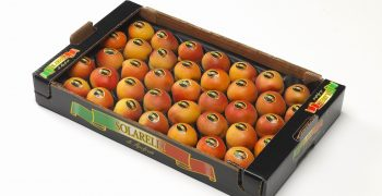 Apricots, Apofruit Italia and Meditteraneo Group crown an exceptional year