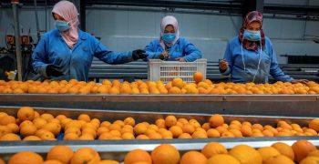 Egypt dethrones South Africa as EU's leading orange supplier