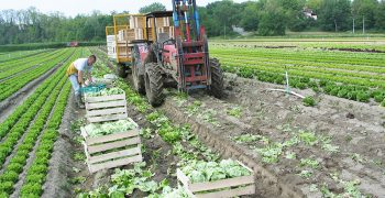 EU registers growth in agri-food trade