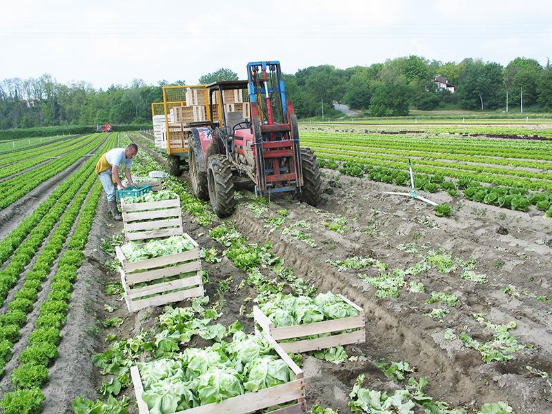 Frech farmers